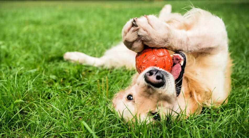 Dog Toy Prices: How Much Toys Really Cost