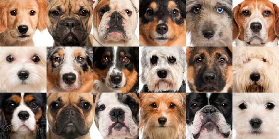 Dog DNA Tests: What They Cost and a Table Comparing What You'll Get