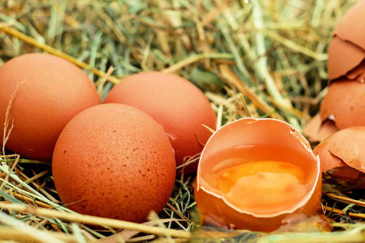 Can Dogs Eat Eggs: What You Need To Know
