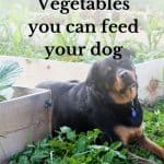 Vegetables you can feed your dog