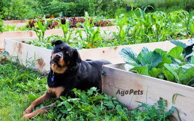 29 Vegetables Dogs Can Eat: Full List With Serving Suggestions
