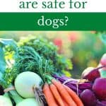 What vegetables are safe for dogs