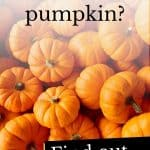 Photo of pumpkins with the questions 'Can dogs eat pumpkin?'