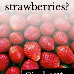Photo of strawberries with the questions 'Can dogs eat strawberries?'