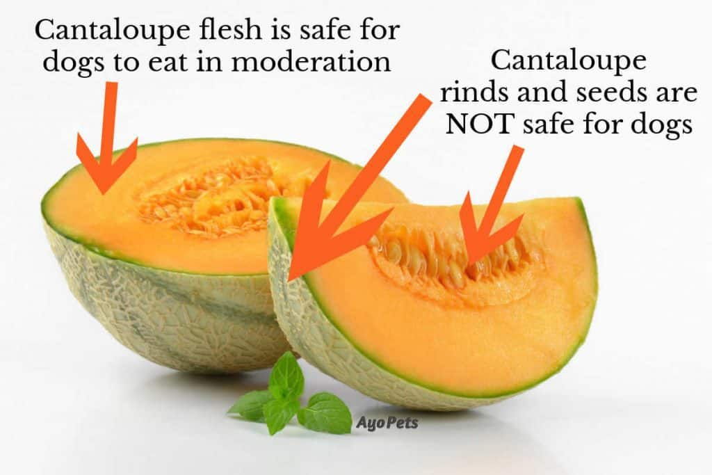 Photo of cantaloupe showing which parts of the fruit dogs can and can't eat