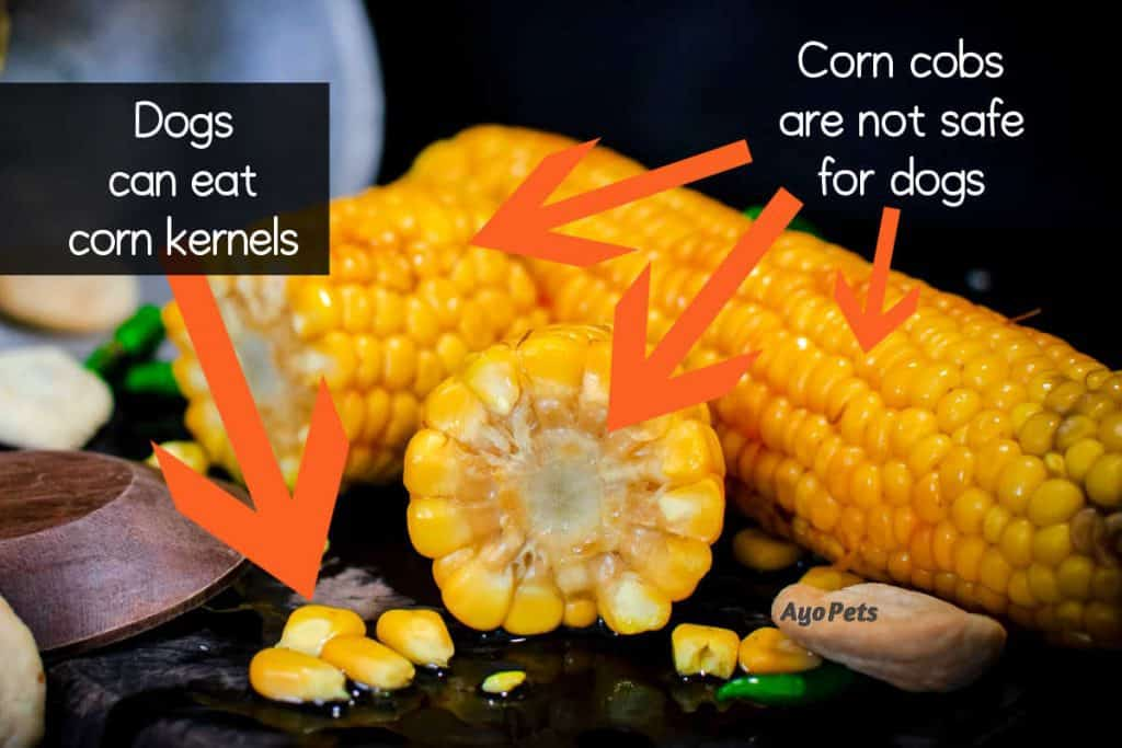 Corn on the cob with lables showing what parts dogs cannot eat