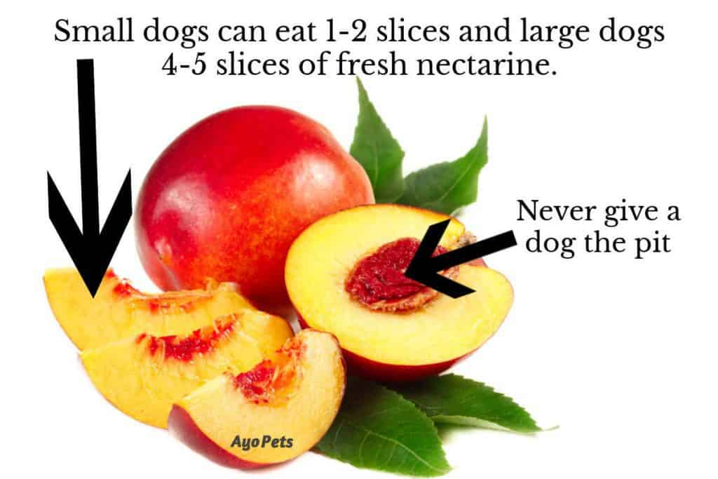 Photo of nectarines showing the flesh that dogs can eat and the pit that dogs can't eat