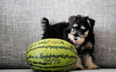 Fruits Dogs Can Eat & What Happens If They Eat Too Much