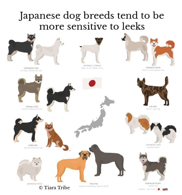 Pictures of Japanese dog breeds with their names
