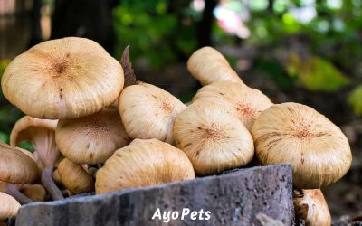 NO-GO: Vegetables that aren't safe for dogs (you'll be surprised!)