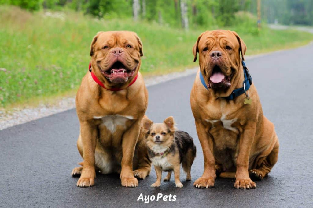 Photo of three dogs sitting on a road in a forest