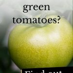 Photo of green tomatoes and the question 'can dogs eat green tomatoes?'