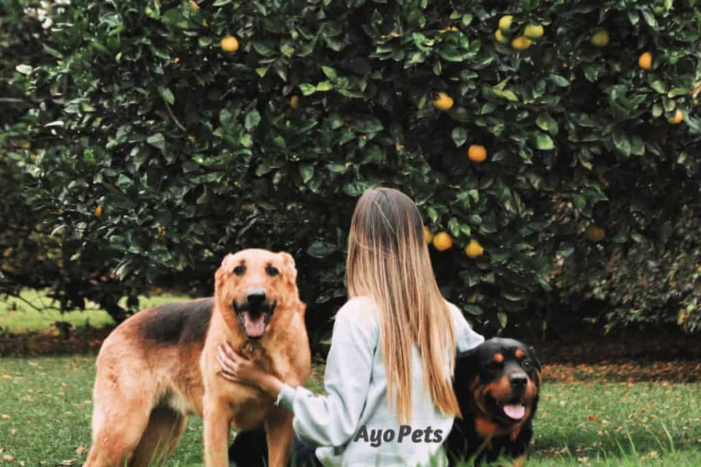 Photo of young woman with two dogs sitting under a citrus tree