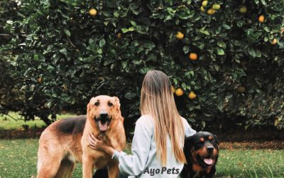 Fruits Dogs Cannot Eat And Why
