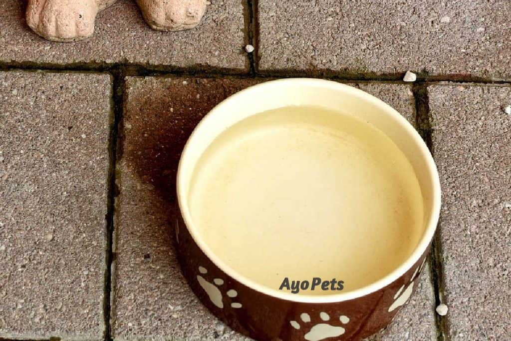 Photo of dog's water bowl with water in it