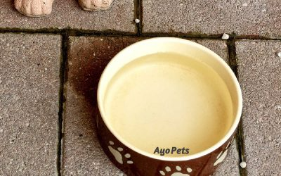 How To Keep Mold Out Of A Dog's Water Bowl: 3 Simple Steps To Follow