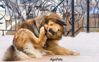Where Do Dogs Get Fleas?