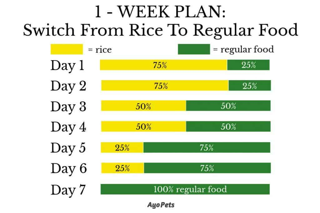 1 week plan to move a dog from rice back to regular food