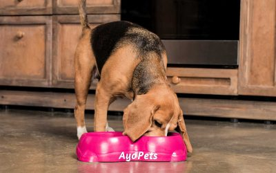 Are Plastic Dog Bowls Safe? The Risks & Signs You Need To Know