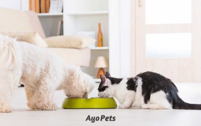Can a Dog and Cat  Share a Water Bowl? Find Out If It's A Good Idea