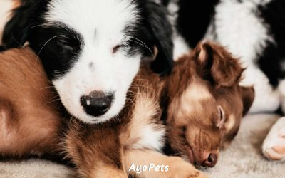 Do Puppies Sleep a Lot? What You Need To Know & Watch Out For