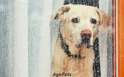 How To Calm A Dog Down During A Storm: What You Need To Know & Do