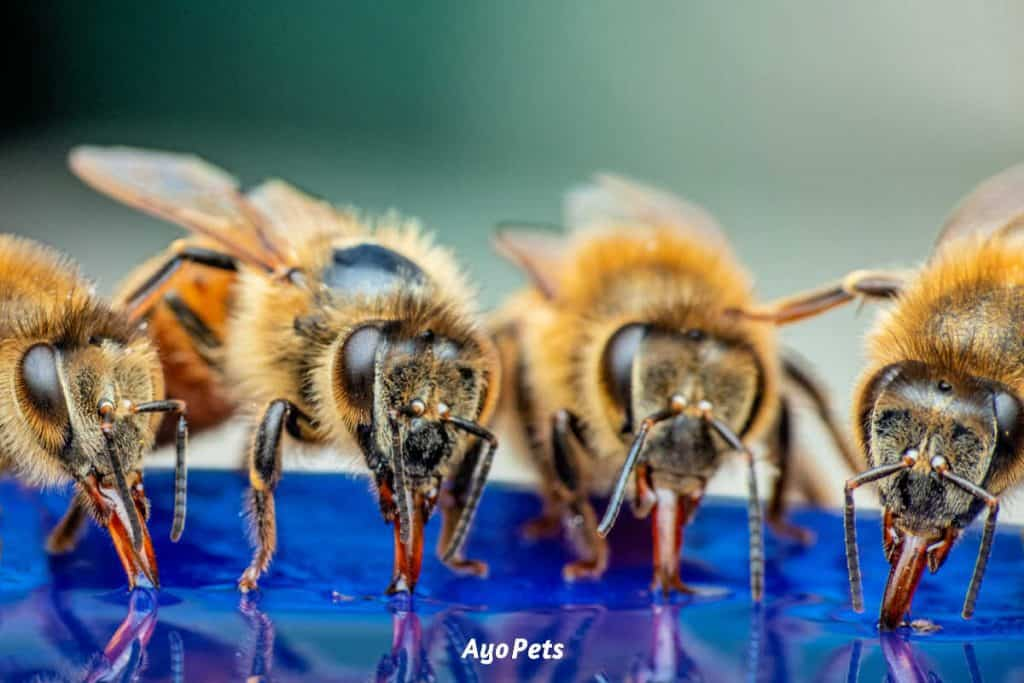 Photo of bees drinking water out of dog bowl