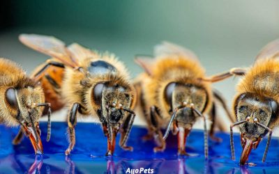 10 Easy Ways To Keep Bees Out Of The Dog's Water Bowl