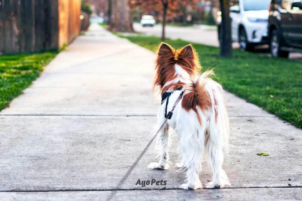 Photo of a dog on a leash