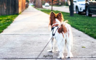 Should You Feed Your Dog Before Or After A Walk? The Real Risks