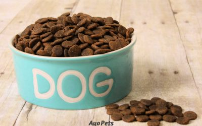Soaking Dog Kibble: 10 Excellent Reasons Why You Should Do It