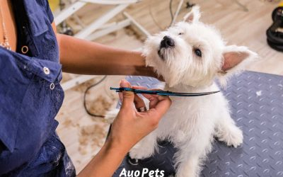When Should Puppies Get Their First Haircut?