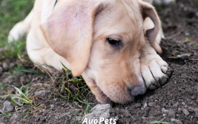 6 Reasons Why Puppies Eat Dirt (And What To Do About It)