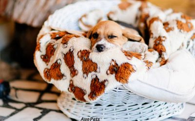 Are Blankets Safe For Pups? Safety Tips And What To Watch For