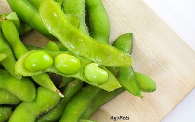 Edamame: What Dogs Can And Cannot Eat