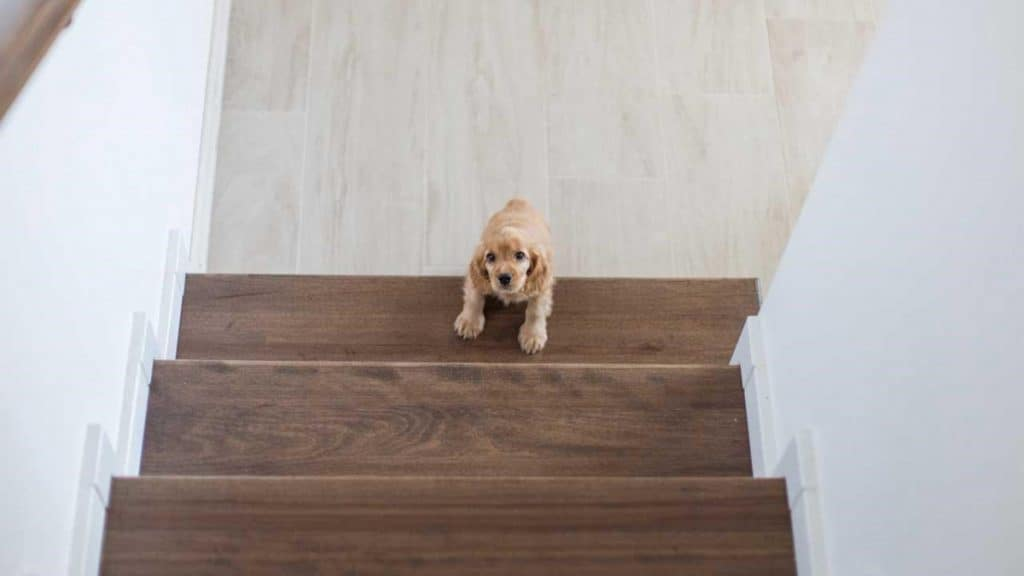 Photo of a puppy at the bottom of a staircase