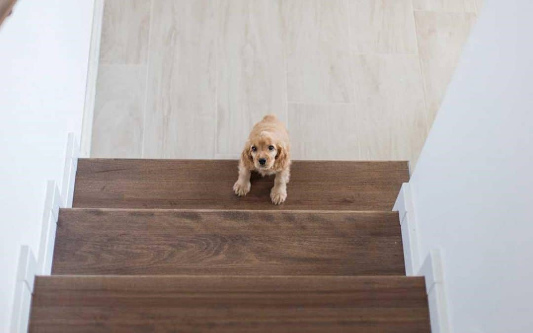 Can Puppies Go Up And Down Stairs? When It's Safe For Your Dog's Breed